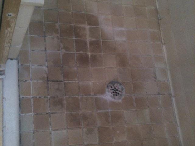 mold or mildew, Black Mold or Mildew in Your Bathroom?